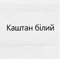 Каштан Белый